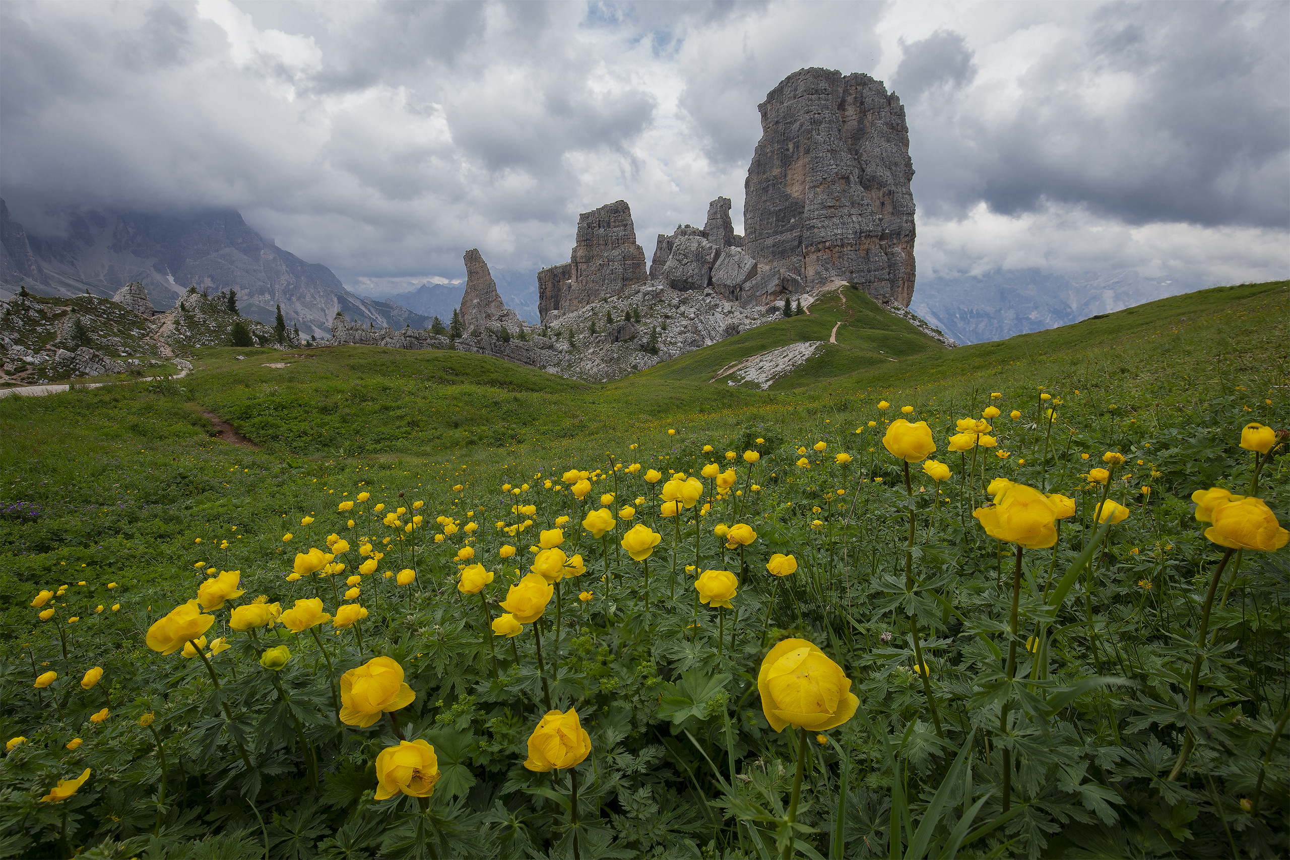 Yellow Flowers in front of Cinque Torri